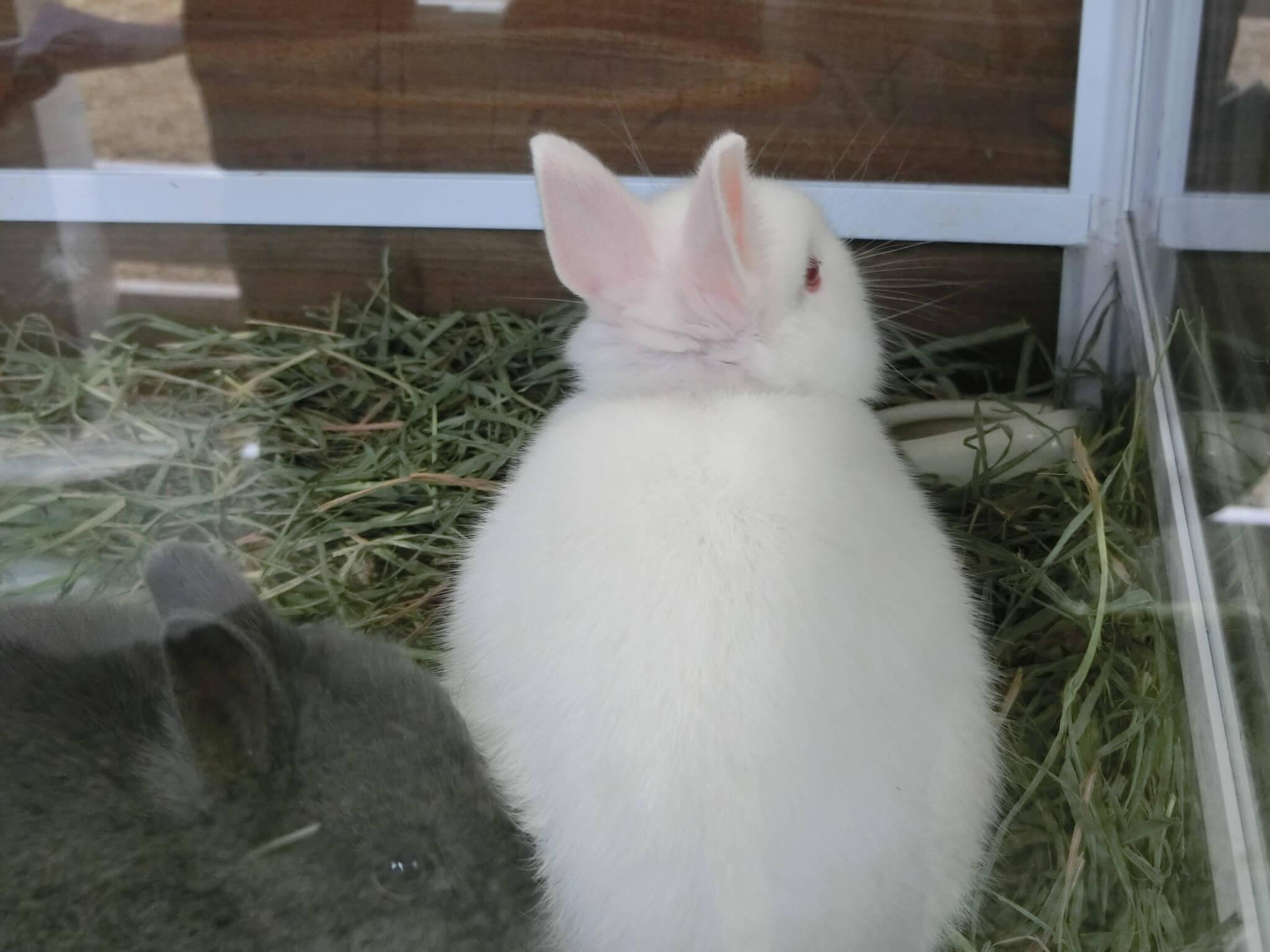 可愛いウサギの赤ちゃん